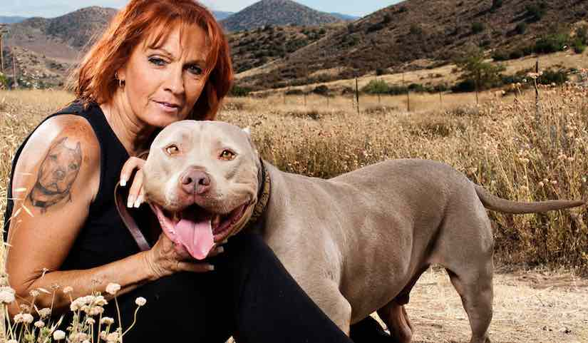 Rescue Dogs To Service Dogs Tv Show