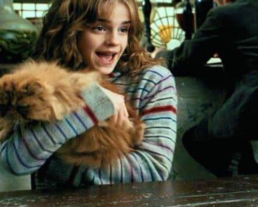 Hermione Cat