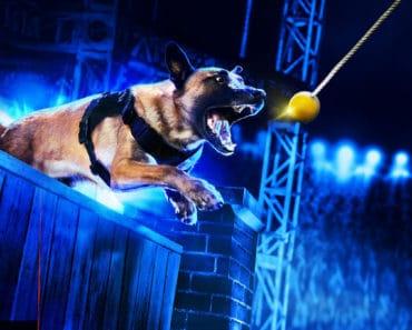 America's Top Dog